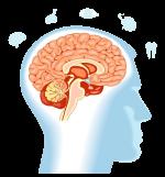 Developmental Population Neuroscience Research Lab